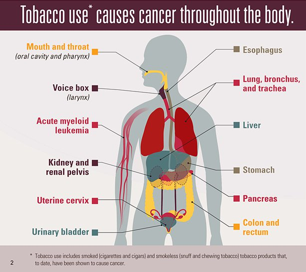 """tobacco use and the damages to the human body """"how tobacco smoke causes disease"""" 1 is the 30th tobacco-related surgeon general's report issued since 1964 it describes the specific mechanisms and pathways by which tobacco smoke damages the human body and leads to disease and death."""