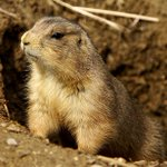Just as things looked more promising..Pls Sign: Denounce Politically Motivated #PrairieDog Hunt With #DonaldTrumpJr. https://t.co/EoIZLMUcAc