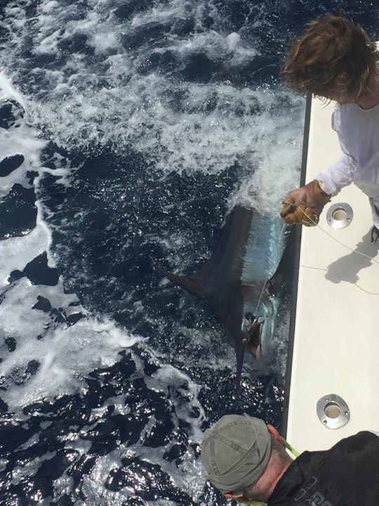 Cape Verdes - Amelia went 2-4 on Blue Marlin.