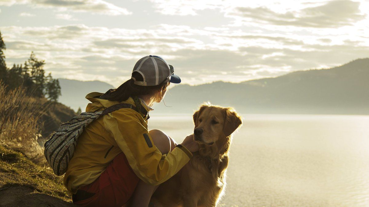 Fancy travelling the world to live with cats and dogs… for free? https://t.co/G2EKTTswJ9
