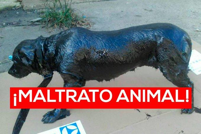 Maltrato animal: perro aparece bañado en petróleo.  https://t.co/5shKr1VLyt