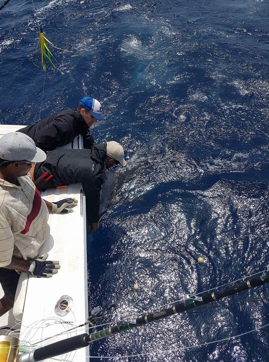 Cape Verdes - Andromeda went 1-1 on Blue Marlin.