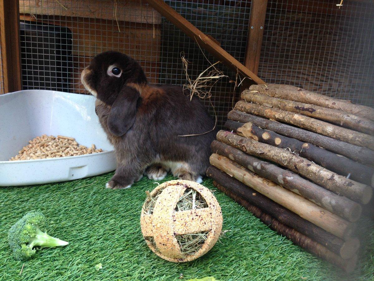 Somebunny&#39;s been enjoying himself outside. #bunnies #diesel <br>http://pic.twitter.com/3kanZjBIlW