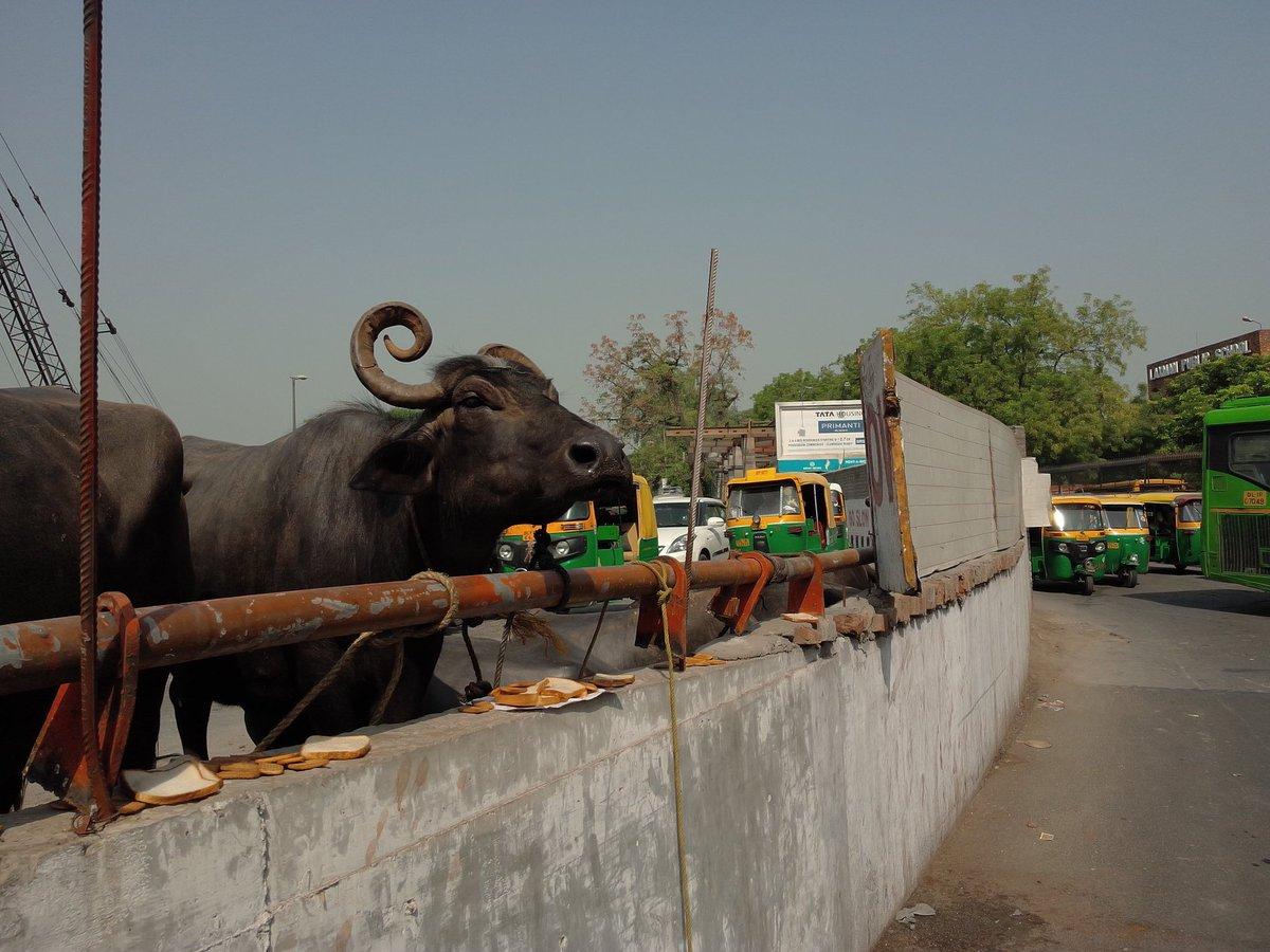 #ALERT | Massive traffic snarls in South Delhi after a truck carrying buffaloes overturns near Hauz Khas <br>http://pic.twitter.com/3II6yu3C05