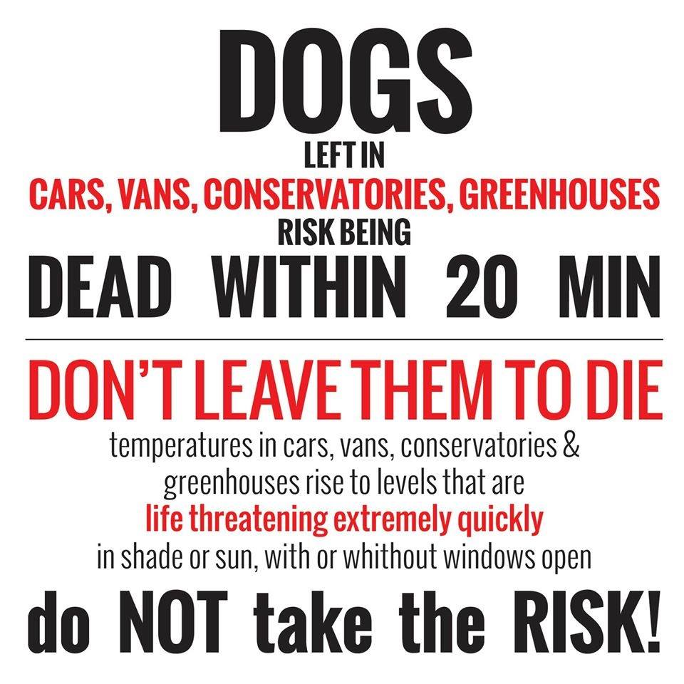 Please be aware and share...Thank you 🐶❤️ #Dogs #DogsOfTwitter