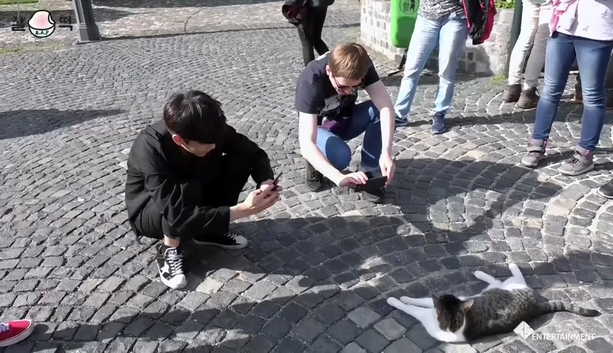 THIS IS MY FAVORITE THING AT THE MOMENT CRIES BAP AND CATS I LIVE FOR THIS