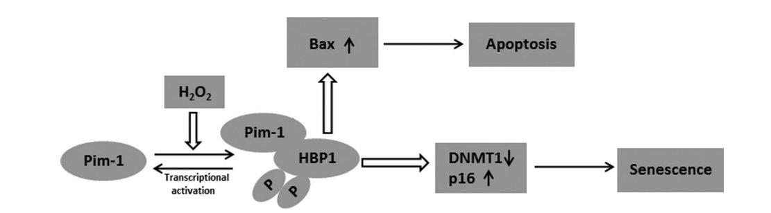 pdf/download введение в теорию чисел алгоритм