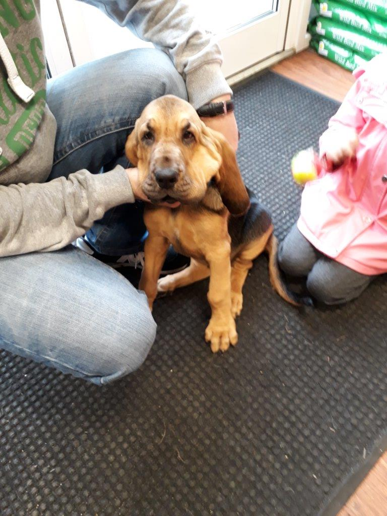 CUTENESS ALERT! 13 week old Jeffrey loves visiting our #Corby store for his food &amp; of course lots of cuddles #puppy #cute #petshop <br>http://pic.twitter.com/ov2itXGuCE