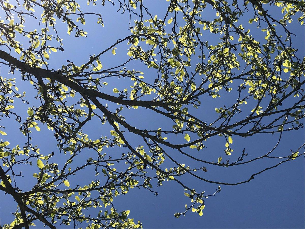 Love this perspective #sunnyday #tree #beautiful #Picardie #hautsdefrance @hautsdefrance @SommeTourisme<br>http://pic.twitter.com/jbBxdNFgjT