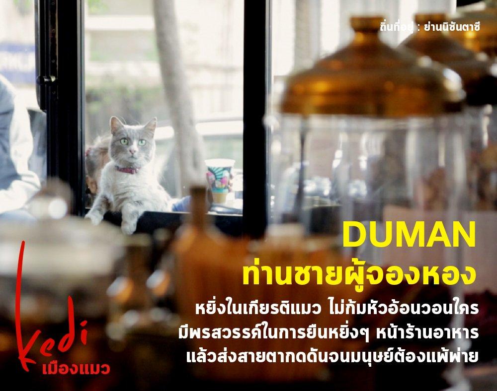 Image result for kedi เมืองแมว