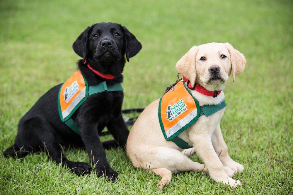 Escola de cães-guia contribui para melhorar a vida de cegos em SC https://t.co/hOd0MRjx3z #G1
