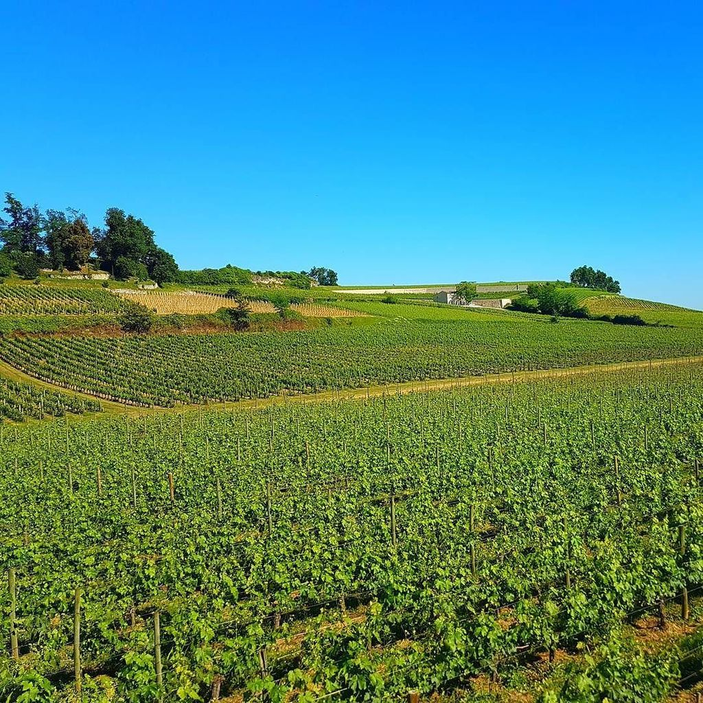 Had to share a photo of #Bordeaux vineyards on #NationalWineDay. #Travel  http:// ift.tt/2qgl0Zd  &nbsp;  <br>http://pic.twitter.com/2KZfRp9FLO