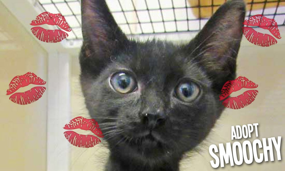 Smoochy will give you a lifetime of love!
