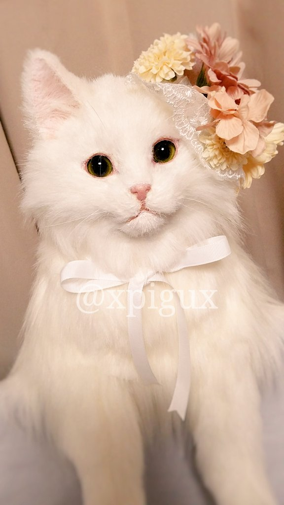三つ目の作品もそろそろ完成だ~💮 久しぶりの白猫! 飾りは撮影用のモノなのでつきません🐱