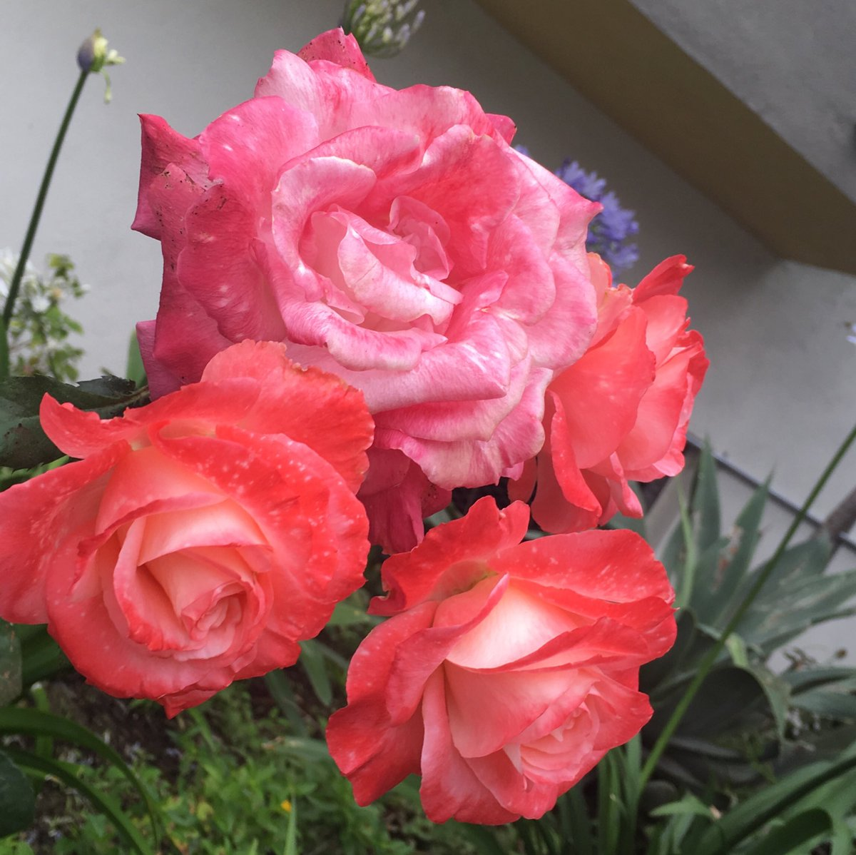 For you! :) #beautiful #flowers<br>http://pic.twitter.com/dIrvPsc1QU