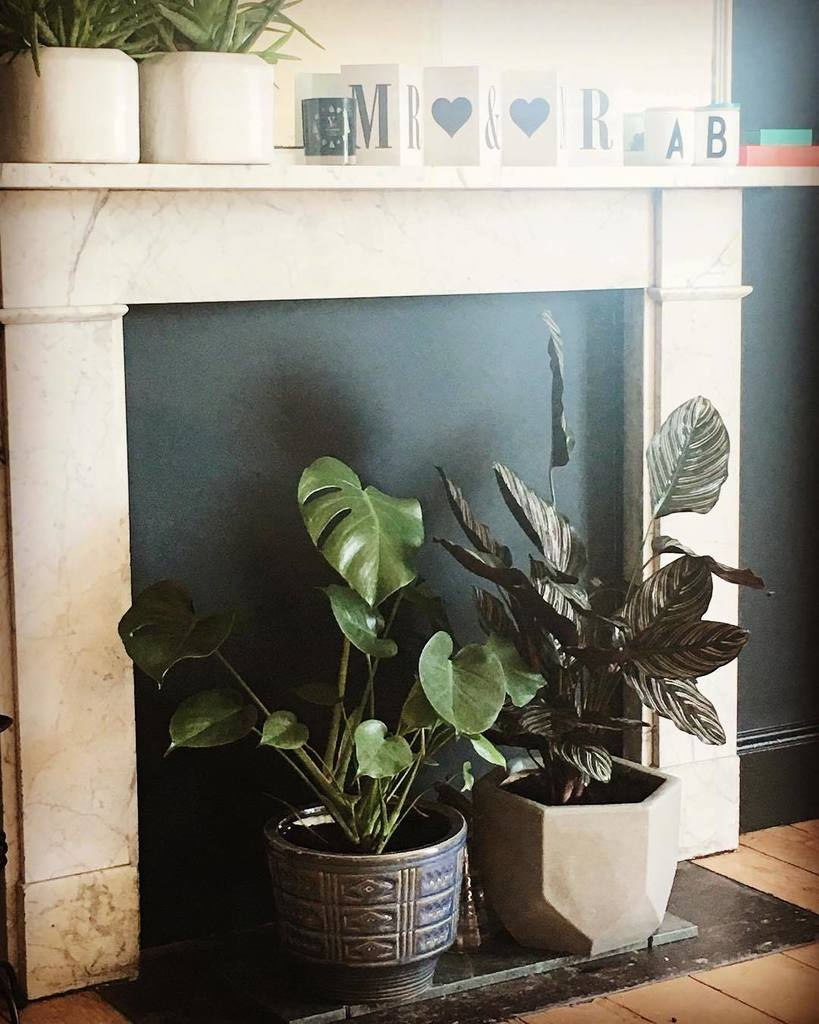 Plant life. They look super comfortable in my bedroom.  #interiors #instainteriors #interiores #livingroom #interi…  http:// ift.tt/2rm353N  &nbsp;  <br>http://pic.twitter.com/COCO2zxLBZ