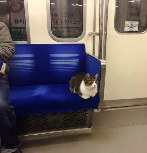 Just riding the sub.  #cute #subway #kitty #cats #pets<br>http://pic.twitter.com/TCZONLksWv
