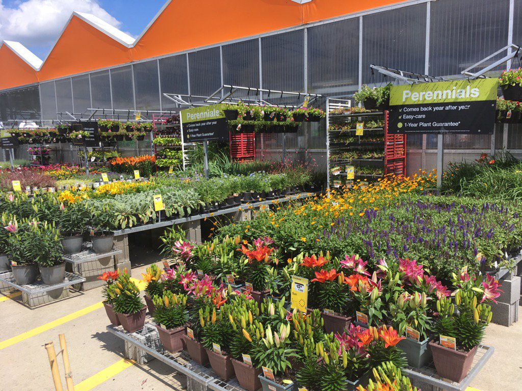 Eric Dyer On Twitter Lots Of Perennial Color At Home Depot 776 Smyrna Tn For Your Memorial Day Weekend Ppsinhd Rmathis333 Rick