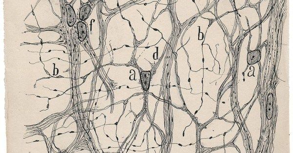 Neuroscience founding father Santiago Ramón y Cajal's pioneering drawing of how the brain works https://t.co/IUfW9qI7Wg