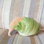 レタスに食べられてる感すごい pic.twitter.com/Z8Rgm558nX
