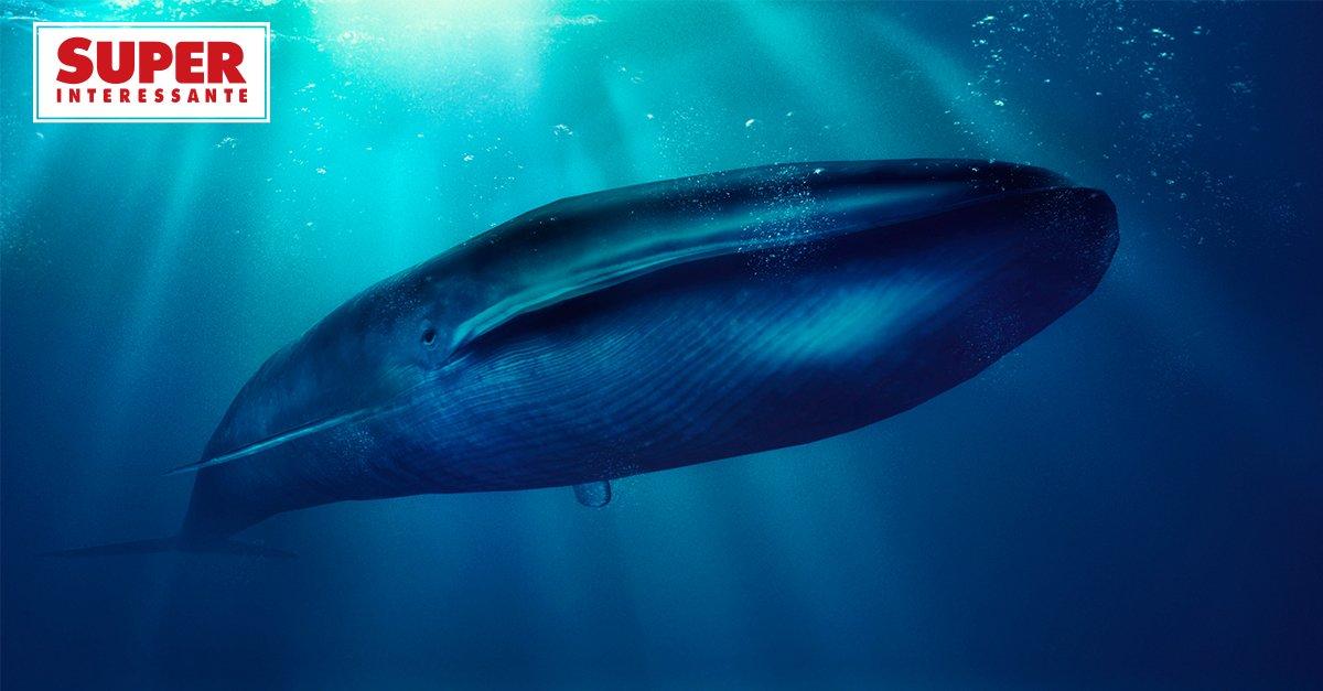 Como as baleias se tornaram os maiores animais da Terra: https://t.co/tBO9tgjPV6