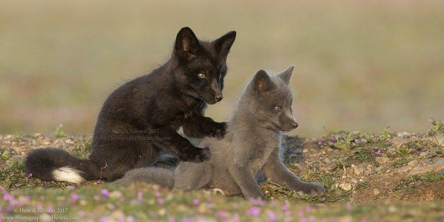 A Little Back Massage by Henrik Nilsson #animals #животные #beautiful <br>http://pic.twitter.com/NAGkSVAPxf