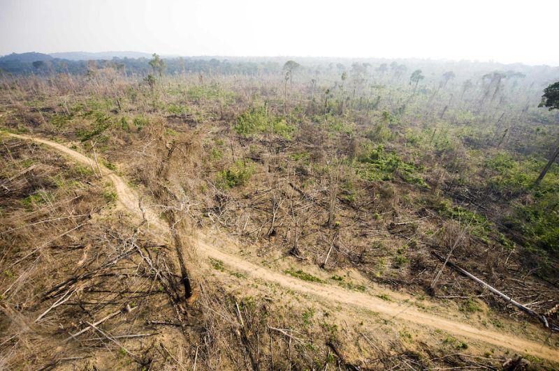 Mudança do Código Florestal deixa mais de 40 milhões de hectares desmatados sem restauração https://t.co/IVwQNMWAyF