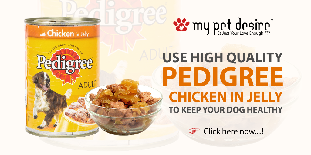 10% Off on Pedigree Dog Food  Show Now :  http:// bit.ly/2rniX5Q  &nbsp;   #petshop #PetsofTwitter #dogsoftwitter #dogs #petfood #discount<br>http://pic.twitter.com/5szUI5RRBB