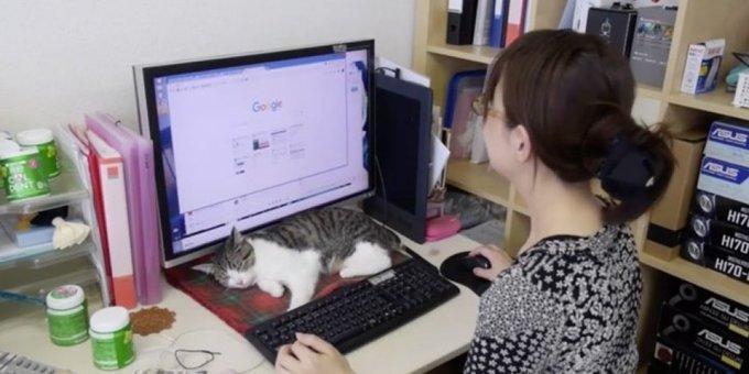 일본에는 고양이를 입양하면 보너스를 주는 회사가 있다(사진) https://t.co/k5awQ72fbQ