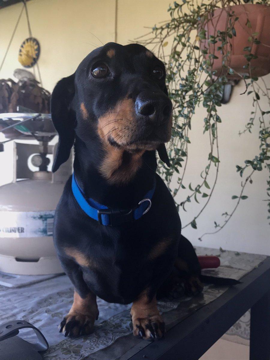 My dog is cute 😍