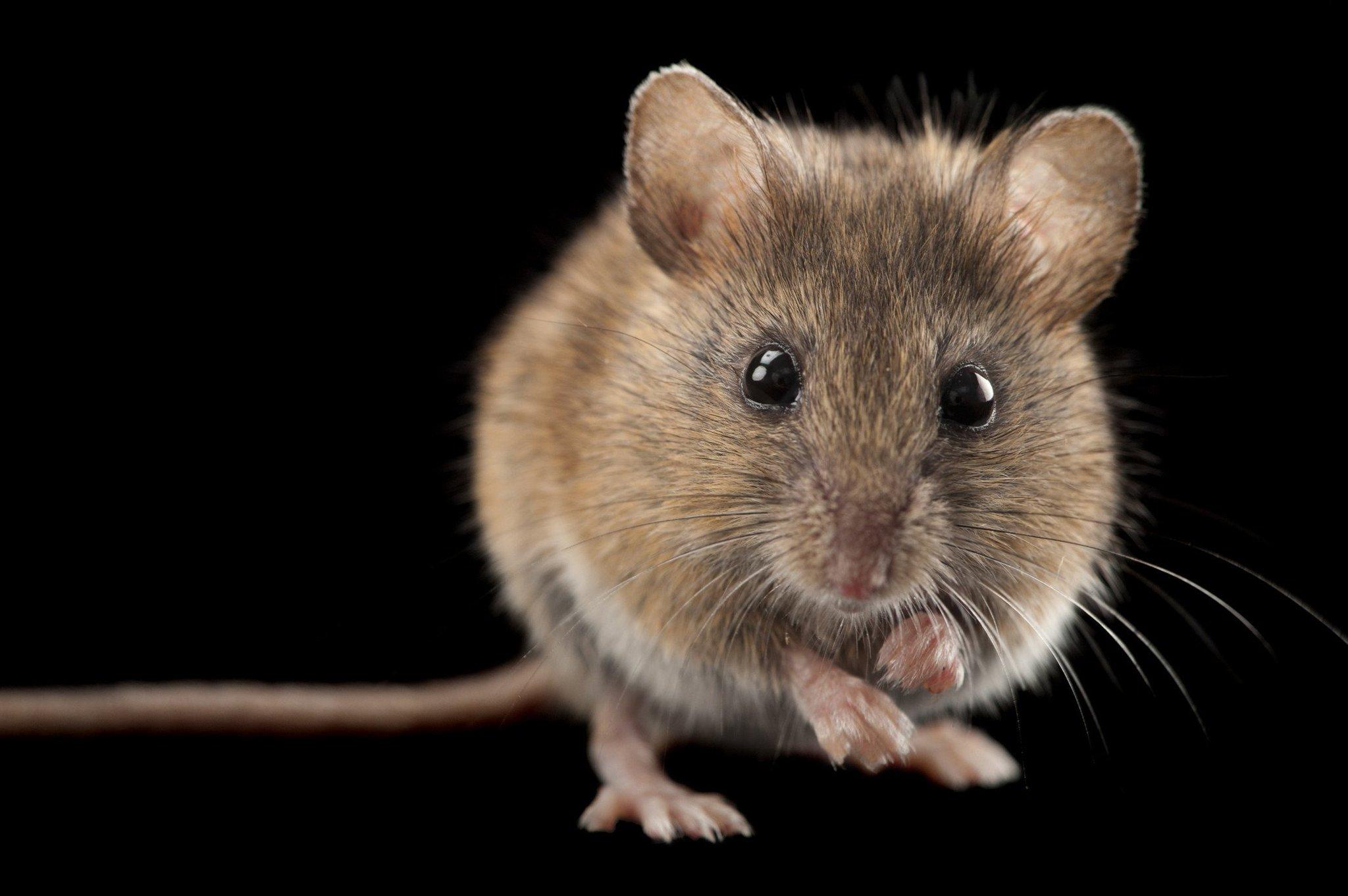 День, мыши на картинках