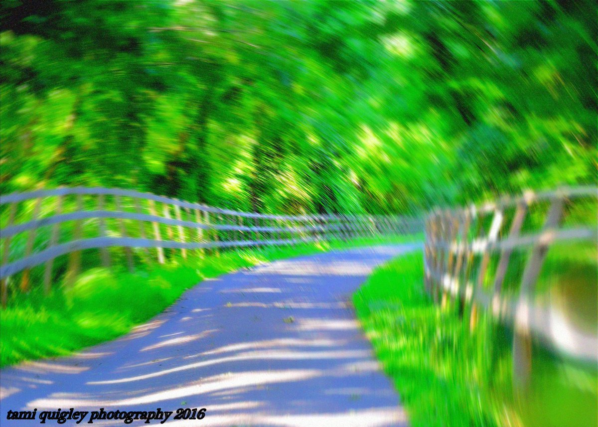 Lush Summer  https:// tami-quigley.pixels.com/featured/lush- summer-tami-quigley.html &nbsp; …  #FridayFeeling #ArtForSale #LehighValley #SauconRailTrail #prints #summer #gifts #greetingcards #decor<br>http://pic.twitter.com/aJMafewIoh
