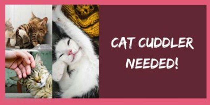Clínica veterinária irlandesa oferece emprego para 'acariciador de gatos' https://t.co/EGAdGdvZJ1 #G1