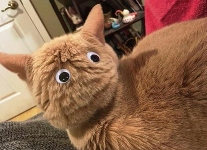 CAT not paying you enough attention? Simply attach a couple of fake eyes to the back of its head. (via @siimonsez) https://t.co/1Ml49B4Ljz