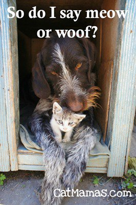 Doesn&#39;t it fill you with hope to see different species of #pets living in harmony? I love it #animalspirit #kitty #dog<br>http://pic.twitter.com/oRoVIl1I8F