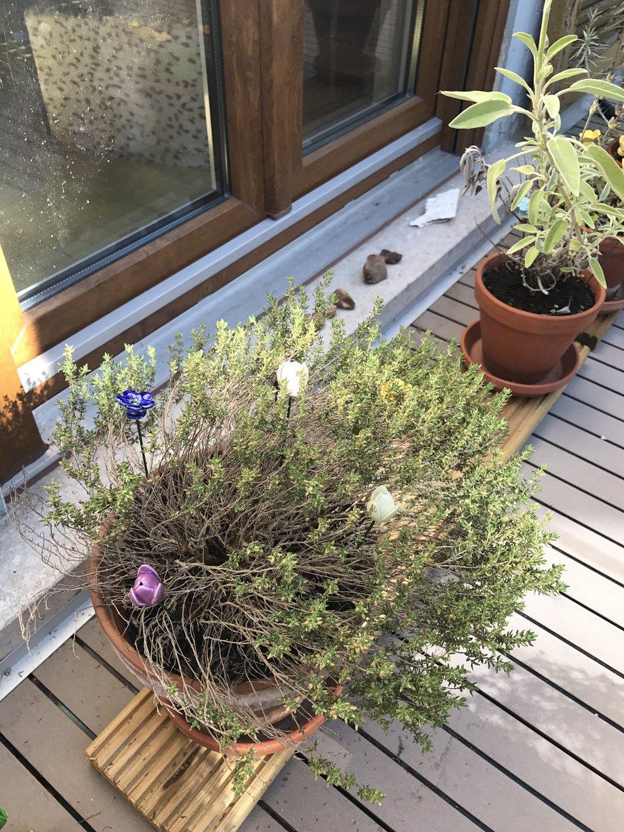 #Gartendekoration Mit Porzellanblumen Pic.twitter.com/e6RmweoChi