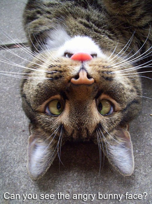 I don`t see it. :)  #cute #adorable #kitty #cats #pets<br>http://pic.twitter.com/lxP6Il31Pv
