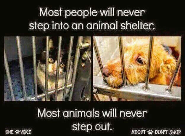 #MemorialDayWeekend Great time to visit UR local #AnimalShelter #Adopt a new #BFF   So much #Love is there<br>http://pic.twitter.com/v7dnMmJxKS