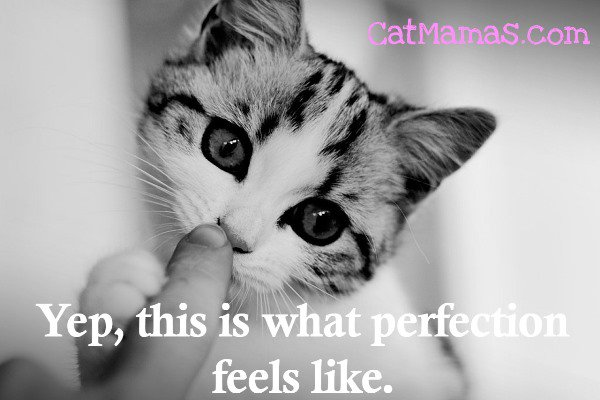 #Kittens make you want to be a better person somehow! Kinder, softer, gentler...do you find that? #kitty #ilovecats<br>http://pic.twitter.com/YJIYl8LR2t