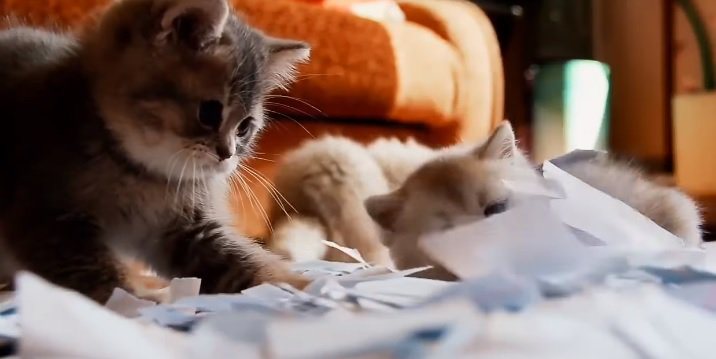 WATCH: Tiny Kittens Playing in Torn Up Paper - @CarlyRadio https://t.c...