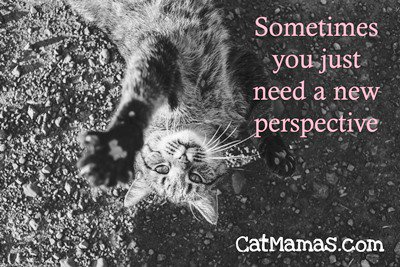 You don&#39;t have to lie on the ground to try this form of #cat inspired #therapy! #selfhelp<br>http://pic.twitter.com/ve4YgtTOxv