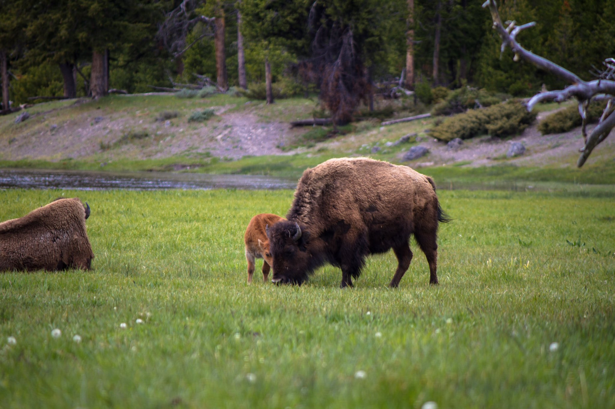 What did the buffalo say to his child before he went to college?  Bison  #CreativeMissions https://t.co/MHnmJdI04R