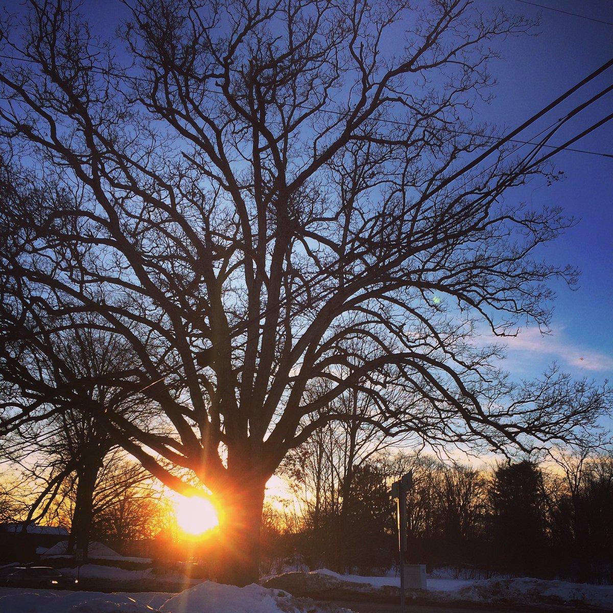 Giornata mondiale dell'ambiente: Treedom ti regala un albero