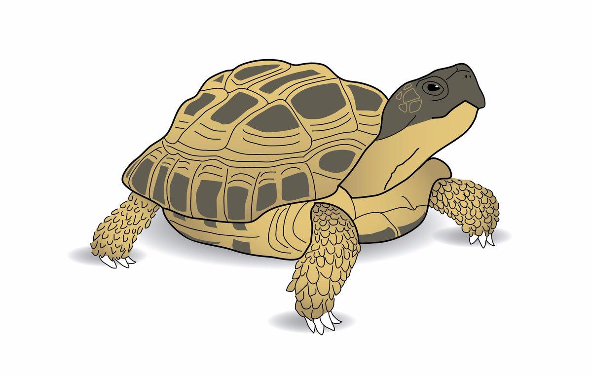 &quot;I am a slow walker but I never walk back&quot;- Abraham Lincoln #colour_collective #wenge #MotivationalQuotes #illustration #tortoise<br>http://pic.twitter.com/e7piMVXFna