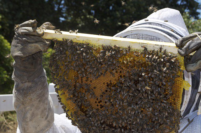 I wish a lot of folks would get into raising honey bees because it has a lot of advantages for this world... #get... <br>http://pic.twitter.com/D8XGJUAV8o