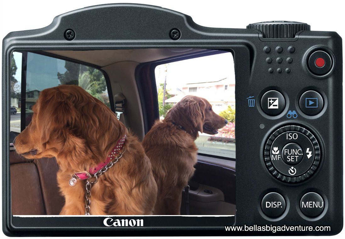 Ready for more pictures!   http://www. bellasbigadventure.com  &nbsp;    #dogs #dog #puppy #puppies #golden_retriever #animals #pets #travel #America #adventure<br>http://pic.twitter.com/zkzgwr4Tcp