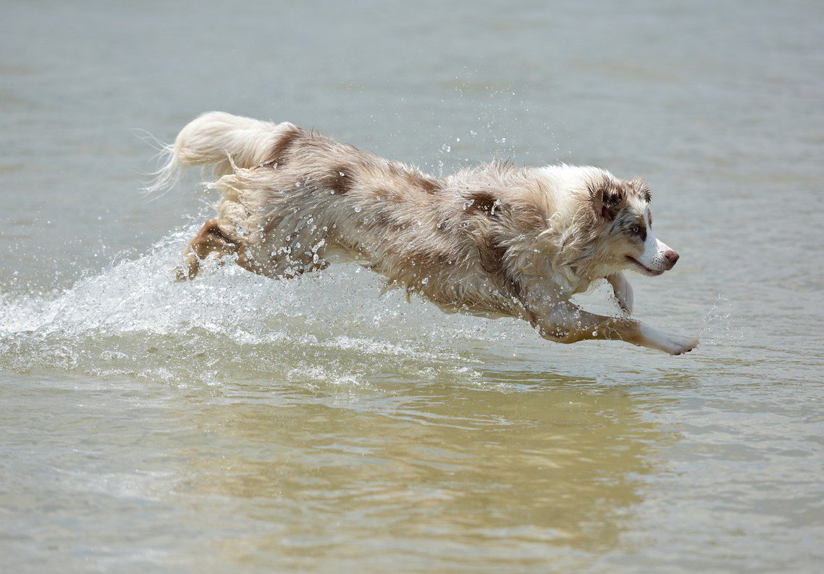Is he running, swimming, flying? I don&#39;t know but I love it!  #dog #friends<br>http://pic.twitter.com/6q97ox5RxK