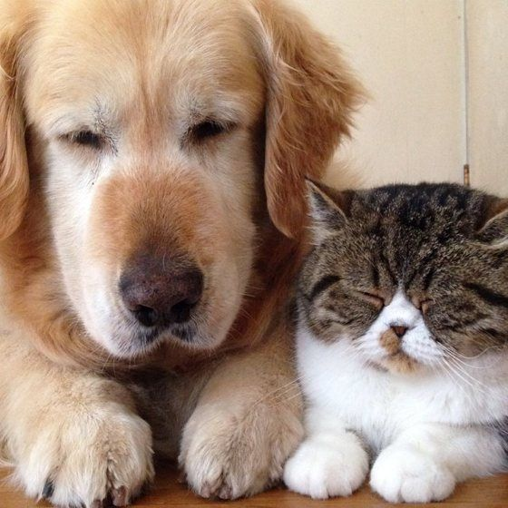 We&#39;re not napping, we&#39;re just thinking really hard! #CatsVsDogs #DogsofTwitter #DogMom #DogDad #Dogs #Dog <br>http://pic.twitter.com/MbVfWw0jFH