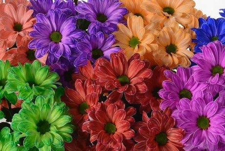 """FloralDaily on Twitter: """"NL: Flower magic at Dekker ..."""