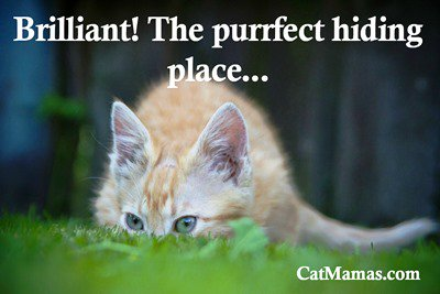 Try not to laugh out loud when your #kitty hides in plain sight &amp; can&#39;t understand how the birds can see her! #funnycat #pets<br>http://pic.twitter.com/RMmkNag01n